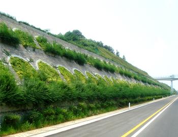 边坡生态修复
